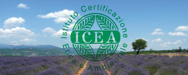Analisi, riprogettazione e sperimentazione della comunicazione interna ed esterna di ICEA
